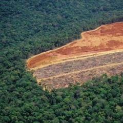 """deforestation and global warming Deforestation: the hidden cause of global warming (daniel howden, 2007/05/14): """" in the next 24 hours, deforestation will release as much co2 into the."""