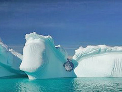 Antarctica Global Warming Facts - the Devastating Impacts On the Flora and Fauna