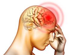 X human brain