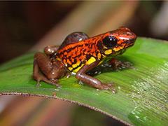 endemic-species