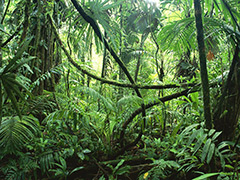 rainforest-plants