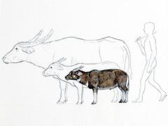 mammalian-dwarfing