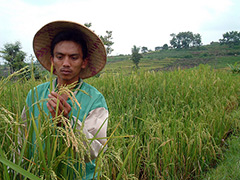 Indonesia-farming