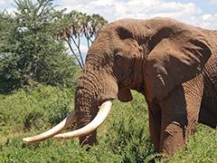 poaching Africa
